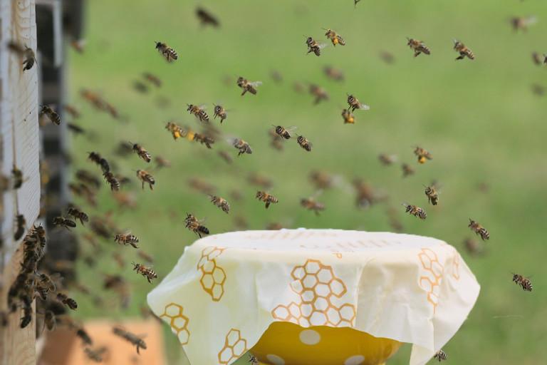 Van de bloemetjes en de bijenwas – Gastblog