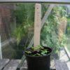 Plantenlabels