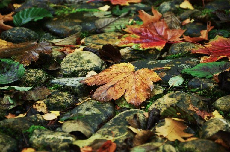 De blaadjes en de herfst….