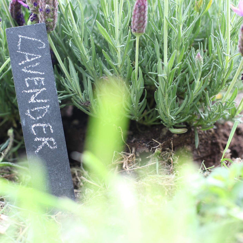 Plantensteker