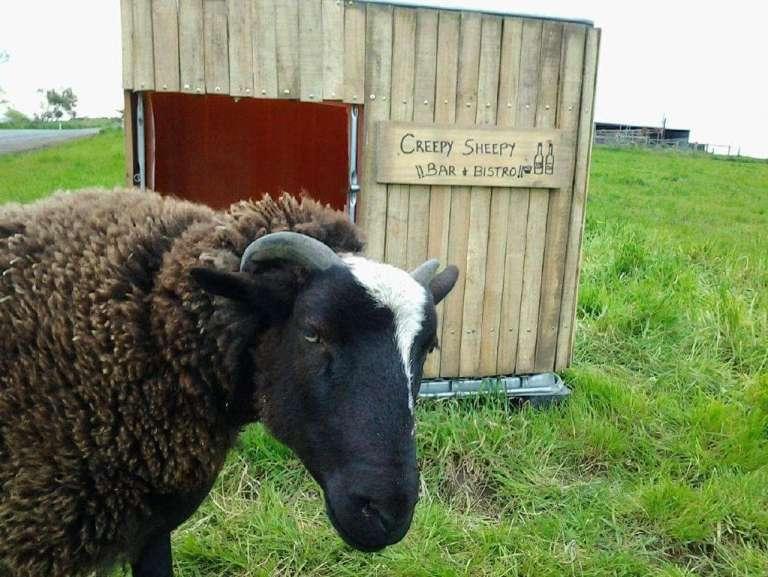 schapenhok