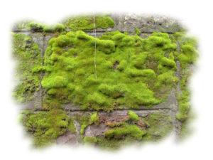 groene aanslag